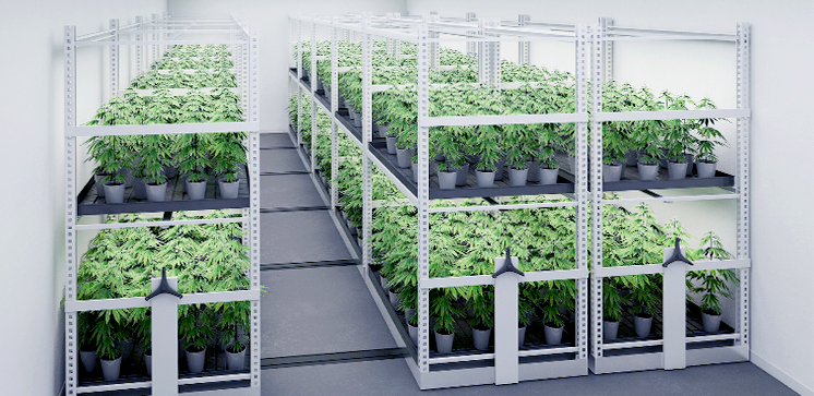 cannabis vertical growing system